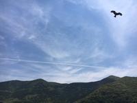 飛行機雲と鯛7kg - Iターンで・・漁師・猟師の主人と離島暮らし