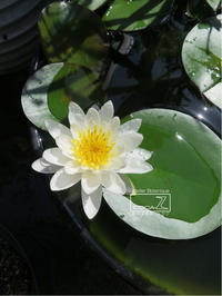 植物的生活803 - Atelier Botanique COCA-Z