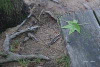 緑の落ち葉 ♪ - Lovely Photo