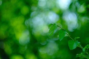 Green circle - Photo Break