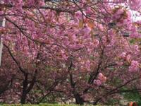 ハッピーな花たち - 登別温泉 第一滝本館 たきもとブログ
