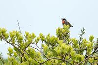 迎えてくれたのは‥ - 趣味の野鳥撮影