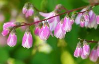 美しい花 - hiderinのお散歩
