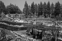 荒牧バラ公園 2017年 (兵庫県 伊丹市) - あなた天使ちゃん ワタシ悪魔っち
