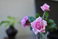 玫瑰 - 自然就好~~花漾蓮華