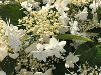 次の季節の気配 - パームツリー越しにgood morning        アロマであなたの今に寄り添うブログ