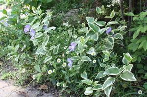小さなポタジエの庭 - にこにこ日和