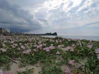 麦の秋 - 清治の花便り