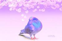 sakura jikan - IL EST TROP TARD     時は過ぎゆく ...