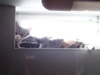 猫さん、おにごっこ。 - 3色猫だんご+1