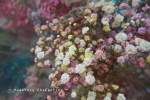 花墟を見下ろしながらちょっと優雅なティータイム~好雪片片 House of Moments - 鴛鴦茶餐廳  いんよんちゃ~ちゃんてぃん