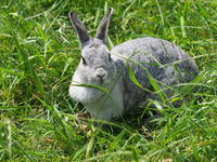 ウサギさん! - さして意味なし、面白くもなし