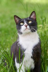ネコさんのカラダ - かげたろうの写楽