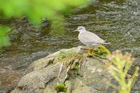 いつもの森で昼散歩 - Bird-Watching Journal