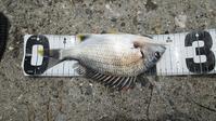 熊本県上天草市樋の島へクロ釣りに行く - ステンドグラスルーチェの日常