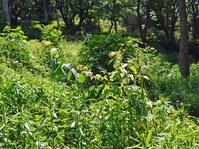 メーンの作業は苗木周辺の下草刈り5・20六国見山定例手入れ - 北鎌倉湧水ネットワーク