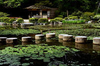 平安神宮 神苑初夏の花 - ちょっとそこまで