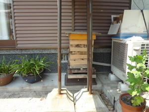 「時騒ぎ」する新蜂が居る群が増えてきた。 - 鑑定士ハチの部屋