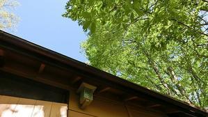 5月の小屋の朝 - ときどき軽井沢