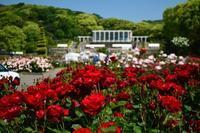 須磨離宮公園のバラ - 案山子の写真紀行