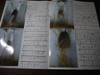 かまきりの観察日記 冊子になって届きましたよ - トータルサポート ハロー(旧 ふぉるつぁのみんなと笑おう)