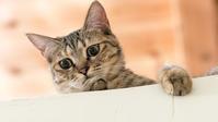 考え事ですか - 猫と夕焼け