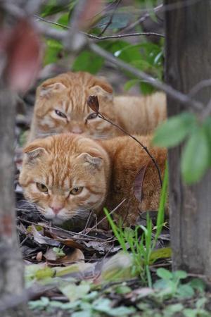 珍しい - 近所のネコ2