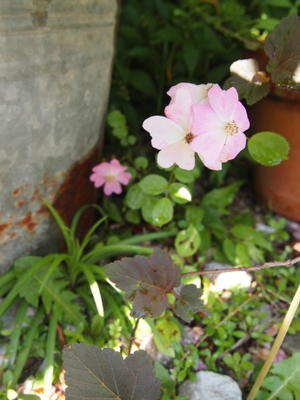 Welcomeのお庭 - *yu-kari*のお庭より*