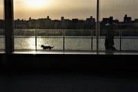 夕暮れ散歩 - フォトな日々