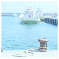 私的 日曜日の漁港 ** - かめらと一緒*