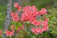 三頭山 - 野の花山の花ウォッチング in 奥多摩