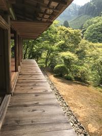 栂尾高山寺と猫展2つ - ご機嫌元氣 猫の森公式ブログ