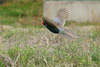 鳥々々・・・! - さすらいの写遊人