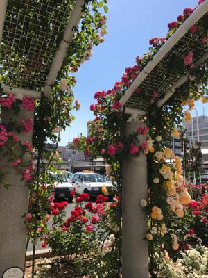 薔薇の香り - サマンサキルトのパッチワークブログ