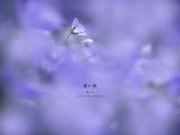 """蒼い春 Vol.05 - ATELIER 302 """" 時の色 """""""