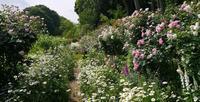 明日は春の薔薇庭園巡りバスツアーです! - 元木はるみのバラとハーブのある暮らし・Salon de Roses
