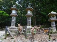 奈良公園 - NATURALLY