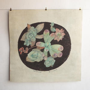 多肉植物を描く 20 - fujikawa news