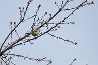 北欧旅行 その3 - 瑞穂の国の野鳥たち