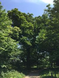 木陰をお散歩。 - MakikoJoy 上北沢のアロマセラピールームあつあつ便り