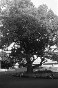 Shade of Tree - g o n b l o