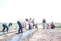 |開催レポート|サツマイモの苗を植えました - せんだいイーストキッチン通信