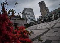 5月22日 今日の写真 - ainosatoブログ02