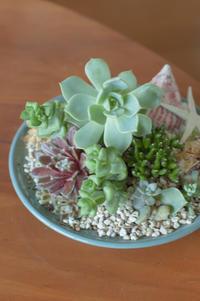 6月のレッスン 多肉植物の寄せ植え * フラワーアレンジメント - le jardinet