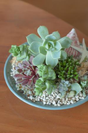 6月のレッスン多肉植物の寄せ植え*フラワーアレンジメント - le jardinet