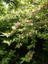 木で咲く花々 - 【出逢いの花々】