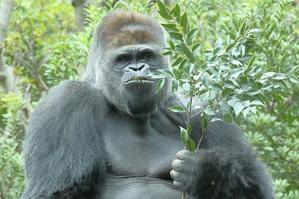 静かに時が流れる、ハオコ、モモコ、コモモ、モモカのファミリー(上野動物園、5月上旬) - 旅プラスの日記