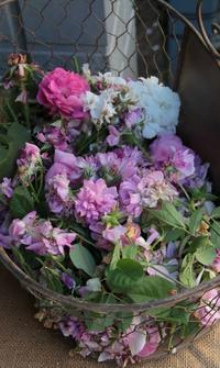 今日の花がら摘み -2017年5月23日- - まとまりの無い庭 excite版