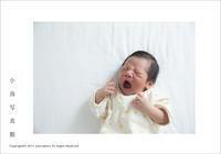 生後3日目のあくび - JIFF:PHOTOから小鳥写真館へ