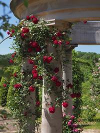 春のバラ祭り - 瞳の記憶